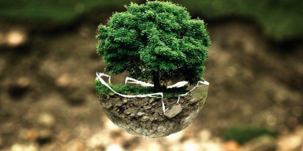 Ley medioambiental